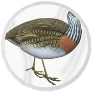 Plains Wanderer  Round Beach Towel by Anonymous