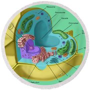 Plant Cell Round Beach Towel