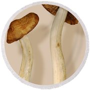 Plant - Mushrooms - I'm So Proud Of My Daughter Round Beach Towel by Mike Savad