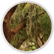 Plantation Oak Trees Round Beach Towel