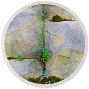 Plants In The Brick Wall Round Beach Towel