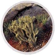 Plants On A Landscape, Anza Borrego Round Beach Towel