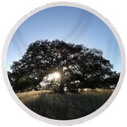 Plateau Oak Tree Round Beach Towel
