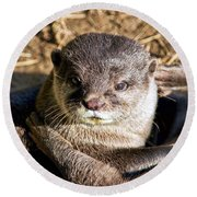 Play Time For Otters Round Beach Towel