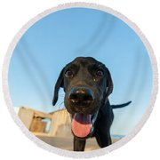 Playful Dog Closeup Round Beach Towel