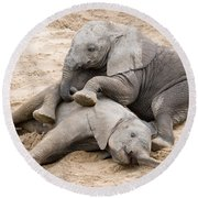 Playful Elephant Calves Round Beach Towel
