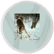 Playful In The Snow Round Beach Towel