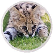 Playful Serval Round Beach Towel