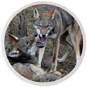 Playful Wolves Round Beach Towel