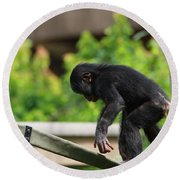 Playful Young Monkey Round Beach Towel
