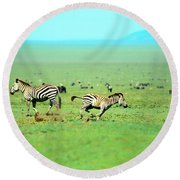 Playfull Zebras Round Beach Towel