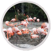 Plenty Of Pink Round Beach Towel