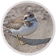 Plover Lover.. Round Beach Towel