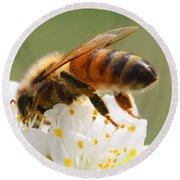 Plum Full Of Bees Round Beach Towel