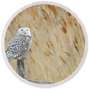 Plum Island Snowy Owl On A Fence Post Round Beach Towel