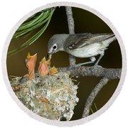 Plumbeous Vireo Feeding Chicks In Nest Round Beach Towel