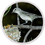 Plumbeous Vireo With Four Chicks In Nest Round Beach Towel