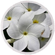 Plumeria Flowers Round Beach Towel