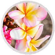 Plumerias Of Paradise 4 Round Beach Towel