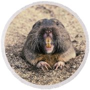 Pocket Gopher Chatting Round Beach Towel