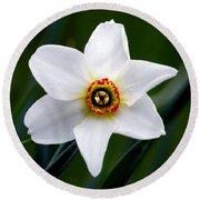 Poet's Daffodil Round Beach Towel