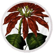 Poinsettia A Traditional Christmas Plant Vintage Poster Round Beach Towel