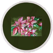 Poinsettia  Round Beach Towel