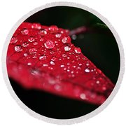 Poinsettia Leaf With Water Droplets Round Beach Towel