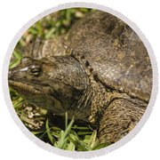 Pointed Nose Florida Softshell Turtle - Apalone Ferox Round Beach Towel