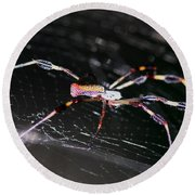 Points Of Contact - Spider - Orb Weaver Round Beach Towel