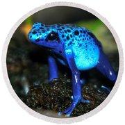 Poison Blue Dart Frog Round Beach Towel