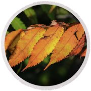 Poison Sumac Golden Kickoff To Fall Colors Round Beach Towel