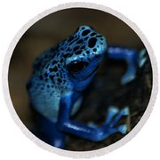 Poisonous Blue Frog 02 Round Beach Towel
