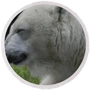 Polar Bear 4 Round Beach Towel