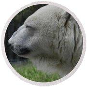 Polar Bear 5 Round Beach Towel