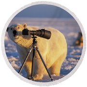 Polar Bear Investigating Photographers Round Beach Towel