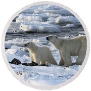 Polar Bear Mother And Cub Sniffing The Air Round Beach Towel