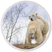 Polar Bear Spring Fling Round Beach Towel