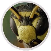 Polistes Dominula 41 Round Beach Towel