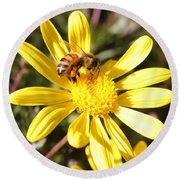 Pollen-laden Bee On Yellow Daisy Round Beach Towel