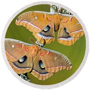 Polyphemus Moths Round Beach Towel
