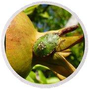 Pomegranate Bug Jewel Case Round Beach Towel