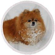 Pomeranian In Snow Round Beach Towel