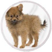 Pomeranian Puppy Dog Round Beach Towel