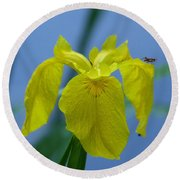 Pond Iris Round Beach Towel