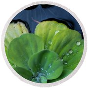Pond Lettuce Round Beach Towel