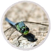 Pondhawk Upclose Round Beach Towel
