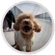 Poodle Dog Round Beach Towel