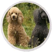 Poodle Dogs Round Beach Towel