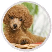 Poodle Round Beach Towel